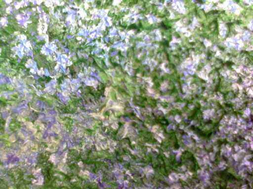 MIOSITIS - 2012 olio su tela 13 x 18