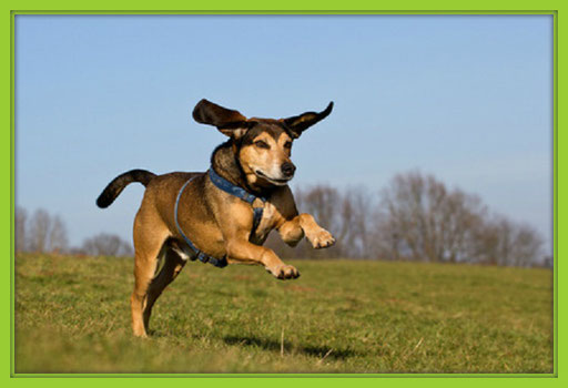 Alltagstraining Für Erwachsene Hunde Hundefairstand Einander