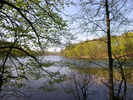 Blick auf den Nehmitzsee bei Rheinsberg