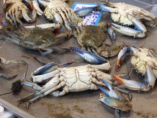 agora, Athènes, crabes