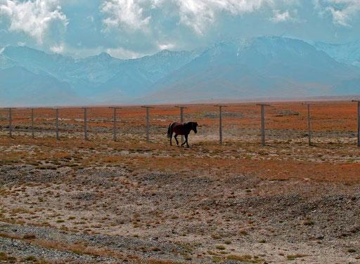 nur dieses Pferd, schien seine Herde auf der chinesischen Seite nicht mehr zu finden