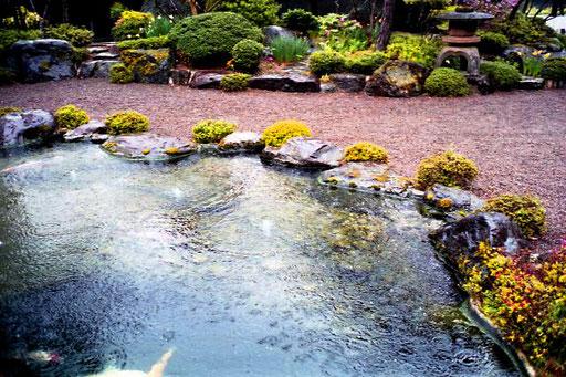 das fliessende Wasser beruhigte sich wieder in diesem kleinen Teich