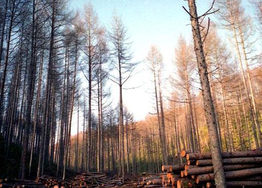 der Berg-Wald - hell und gepflegt