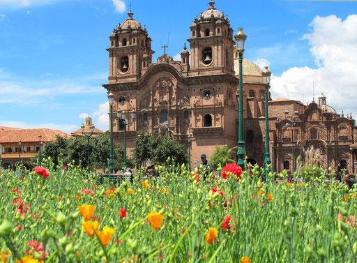 die Wiese vor der Cathedrale voller Frühlings-Blumen