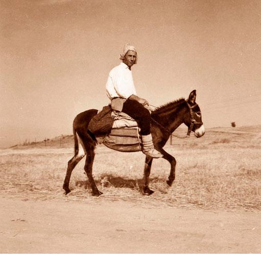 der Esel, Freund und Transportmittel über viele Jahrtausende - heute kaum noch zu sehen