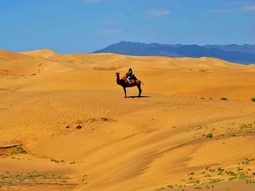 ein Traum-Bild - ein Kamelritt in der legendären Wüste Gobi
