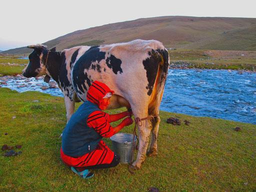vor Sonnenuntergang wurde von Ika noch die einzige Kuh gemolken