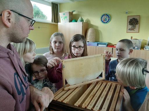 Bienenbeute Wabe bei der Schüler Imker AG Zingst