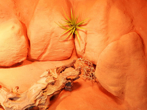 Outbackterrarium mit lebenden Tillandsien