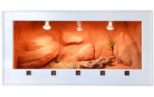 Wüstenterrarium Outback