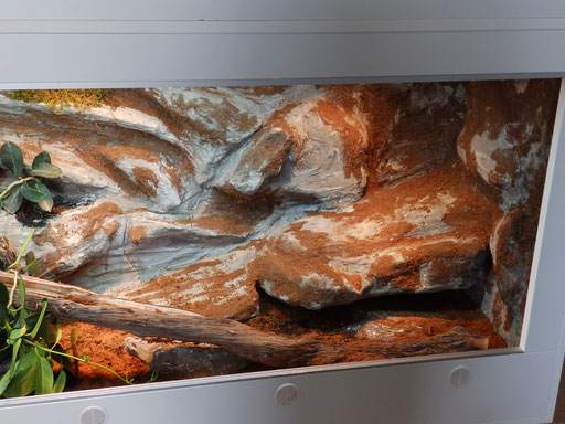 Trockenbereich im Terrarium für Königspython