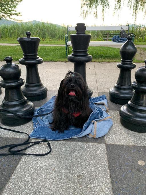 """... kleine """"Schach-Meisterin"""" ... 4,7J"""
