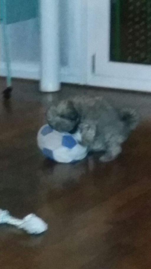 ... mein Ball ... 3M