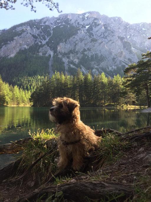 """... bin ein kleiner """"Berg-Hund"""" ... 3,5M"""