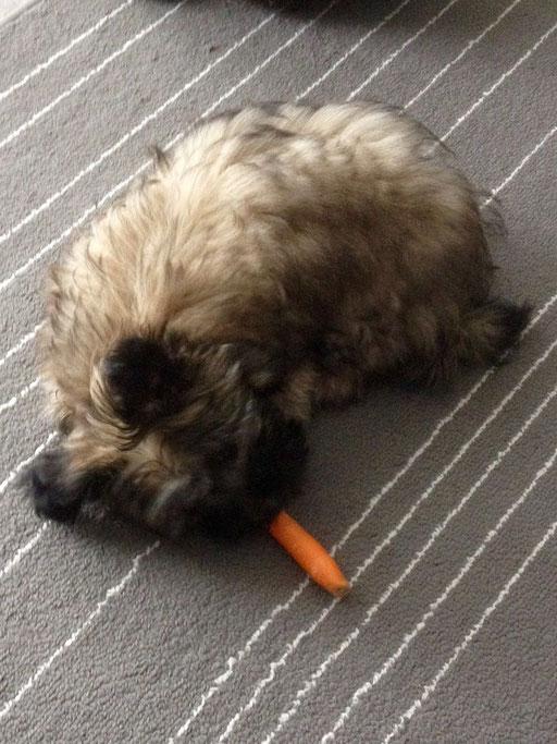 ... ich liebe Karotten ... 3,5M