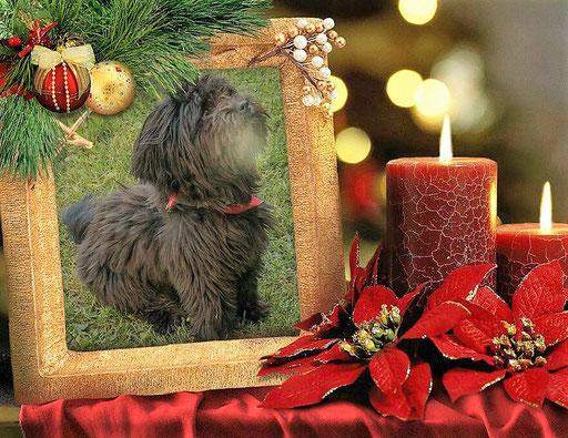 ... Weihnachten 2016 ... 2,3J