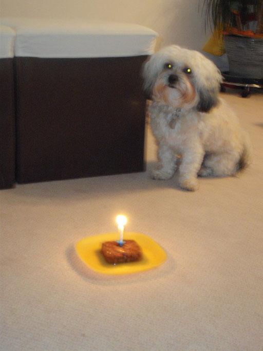 ... mein erster Geburtstag ... 12 Mo