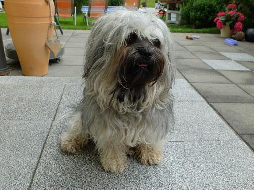 ... Prinz Basil ... 3,3J