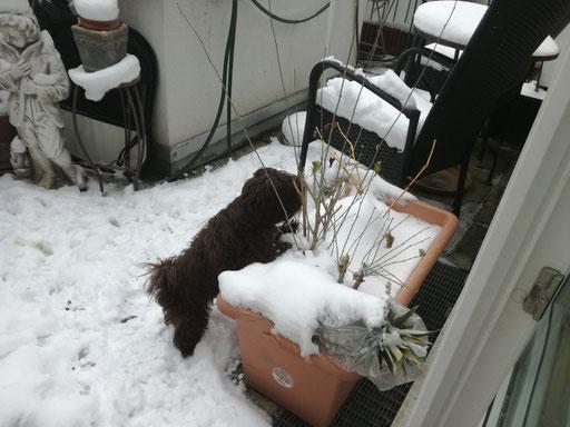 ... mein erster Schnee ... 6M