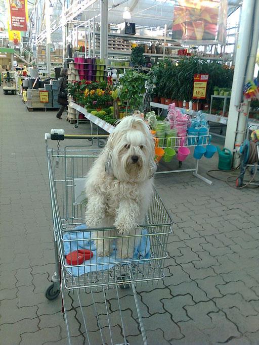 ... beim Einkaufen ... 3J