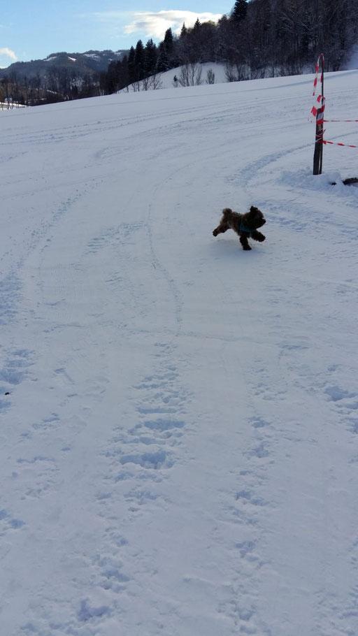 ... juhuuu .... Schnee ... 1,5J