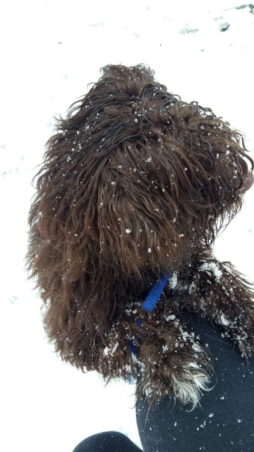 ... bin ein Schnee-Flocken-Bolli ... 6M