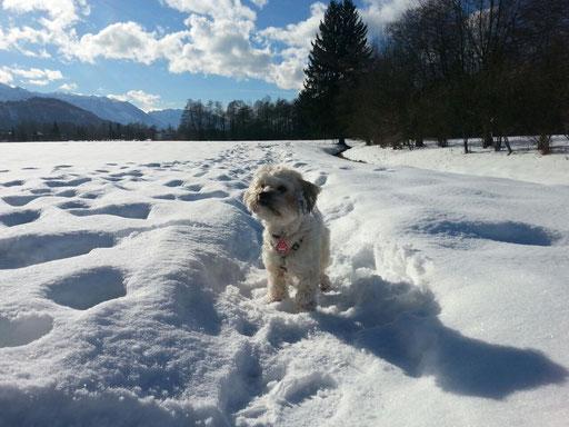 "die ""Schnee-Prinzessin"" Dalyza 1J"