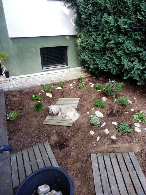 """... lieg in meinem """"Kräuter-Garten"""" ... 1,3J"""