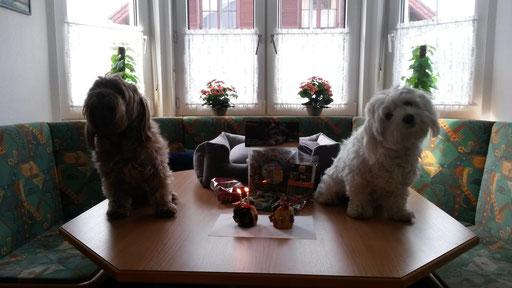 ... Hunde-Party 2014 ... bin schon 2 Jahre alt