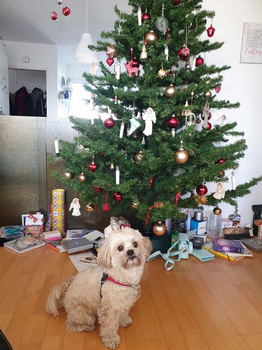 ... Weihnachten 2019 ... 5,11J