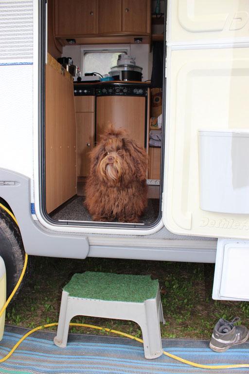 ... mei erster Camping-Urlaub ... hundegeil ... 8 Mo
