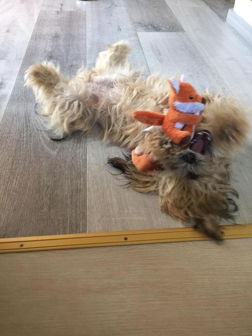 ... kämpfe mit meinem Spielzeug ... 8M