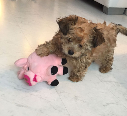 ... mein Neujahrs-Schweinchen ... 3,5M