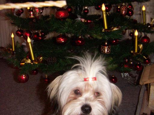 ... mein erstes Weihnachten ... 8 Mo
