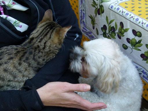 ... schmusen mit Katze Franzi ... 4,5J