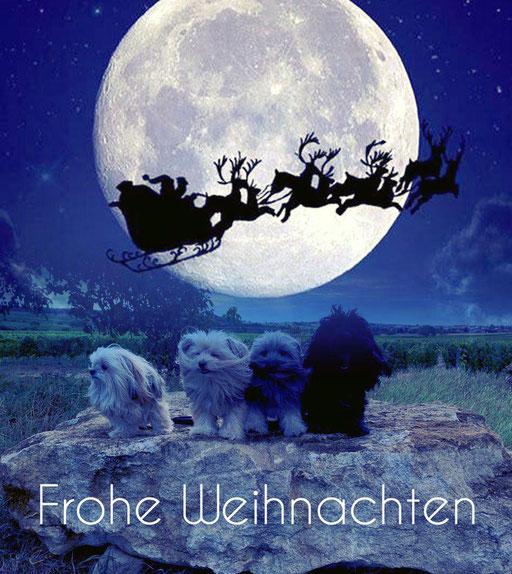... wir wünschen Frohe Weihnacht ... 2020 5,2J