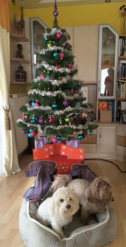 ... Weihnachten 2016 ... 4,3J