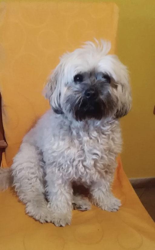 ... liebe mein Hunde-Leben ... 7,9J