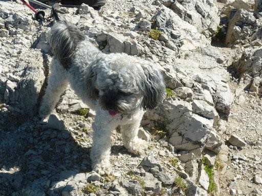 """... bin ein richtiger """"Tiroler Berg-Hund"""" ... 1,4J"""