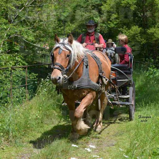 La Route Du Beaujolais 2015 - samedi 23 mai 2015 - parcours en après midi - 03