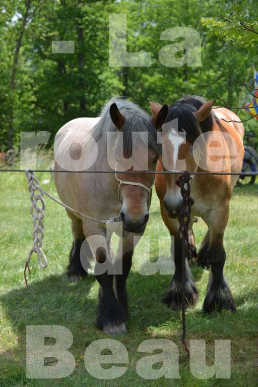 La Route Du Beaujolais 2015 - dimanche 24 mai 2015 - pause déjeuner - 03