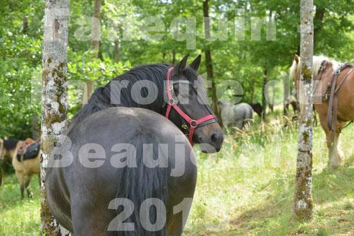 La Route Du Beaujolais 2015 - dimanche 24 mai 2015 - pause déjeuner - 09