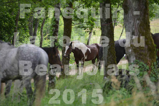 La Route Du Beaujolais 2015 - dimanche 24 mai 2015 - pause déjeuner - 10