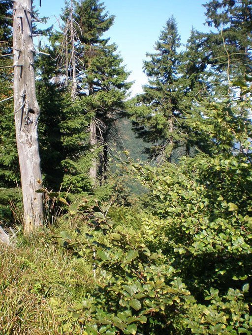 Flora und Fauna in Beskiden