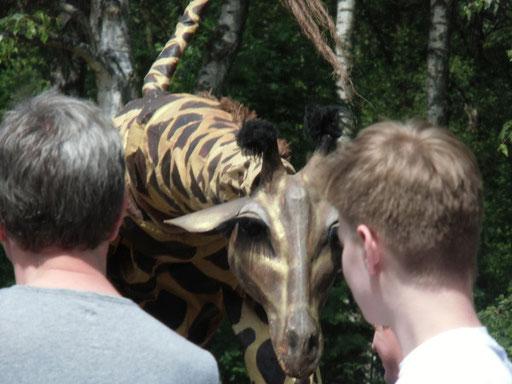 teatro pavana - Giraffes