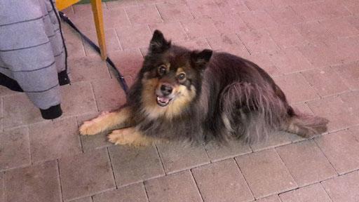 Erste Hilfe beim Hund - Guntershausen