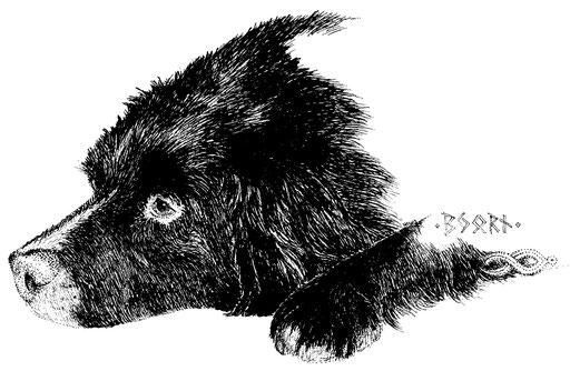 Björn der Bär, ein wahrer Gemütshund