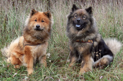Ronja & Ylvi ... unser Dream-Team !