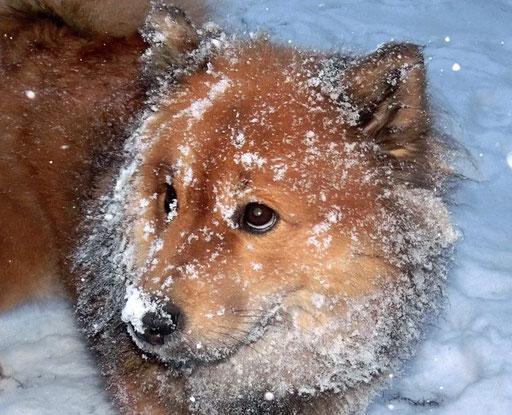 Ronja mit Schneegesicht