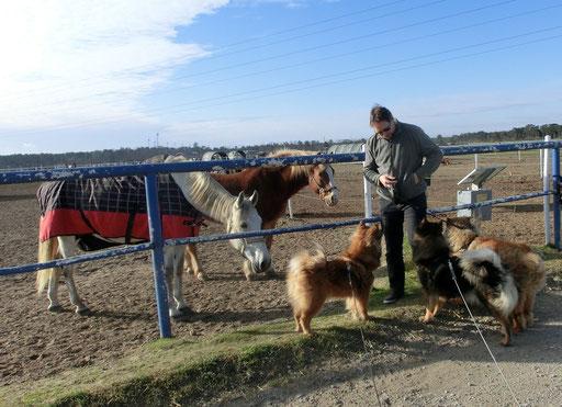 Besuch bei den Pferden